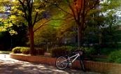 毛馬桜之宮公園Sakuranomiya Park